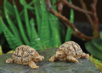 Pair of Tortoises for Miniature Fairy Gardens