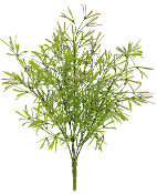 "12"" Asparagus Tree Permanent Botanical For Fairy Garden"