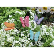 Set/4 Butterfly Picks for Miniature Fairy Gardens