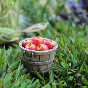 Bushel of Fairy Apples For Miniature Gardens