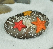 Starfish on Rock Landscape Accessory for Miniature Fairy Gardens