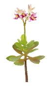 "8"" Blooming Succulent Permanent Botanical For Fairy Gardens"