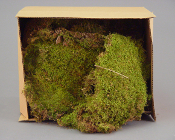 "Freshly Harvested Moss (approx 10"" x 10"")"