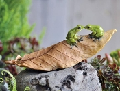 Two Frogs On Leaf For Miniature Fairy Gardens
