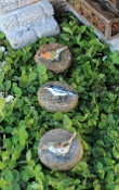 Set of 3 Songbird Stepping Stones for Miniature Fairy Gardens