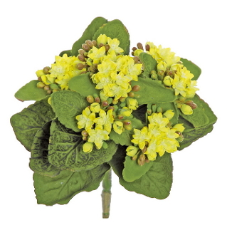 "9"" Permanent Kalanchoe Yellow Flowering Tree For Fairy Gardens"