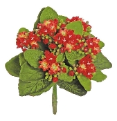 "9"" Permanent Kalanchoe Red Flowering Tree For Fairy Gardens"
