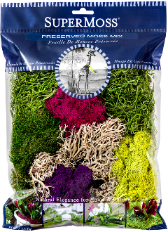 Vibrant Variety Fairy Moss Pack - Preserved - New Larger Size