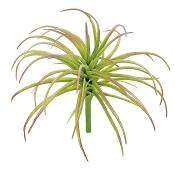 Air Plant - Tillandsia - Perm. Botanical For Mini  Fairy Gardens